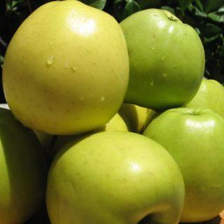 apples2+003.JPG