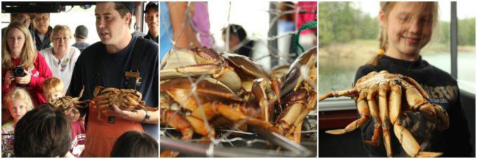 Dungeness crab fishing in Alaska