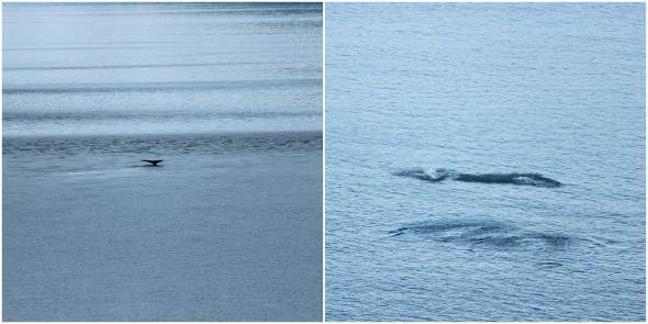 Whale spotting in Alaska