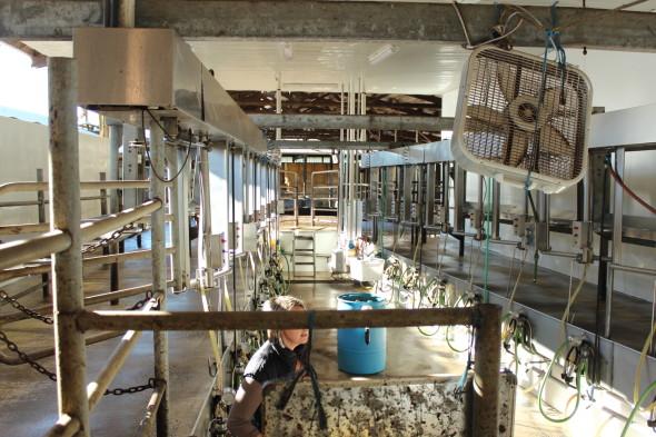 Farm milking