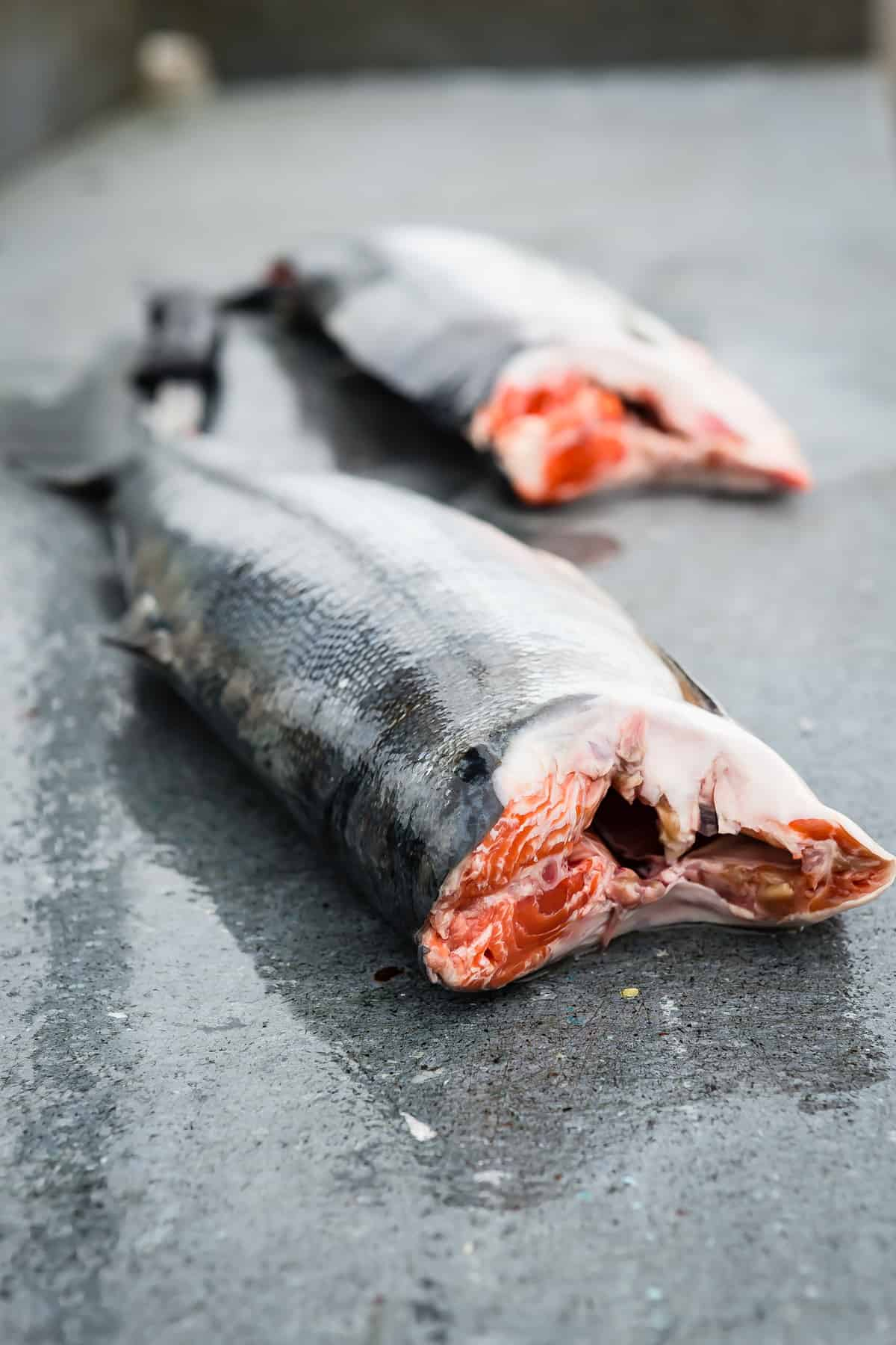 Fresh Copper River Salmon