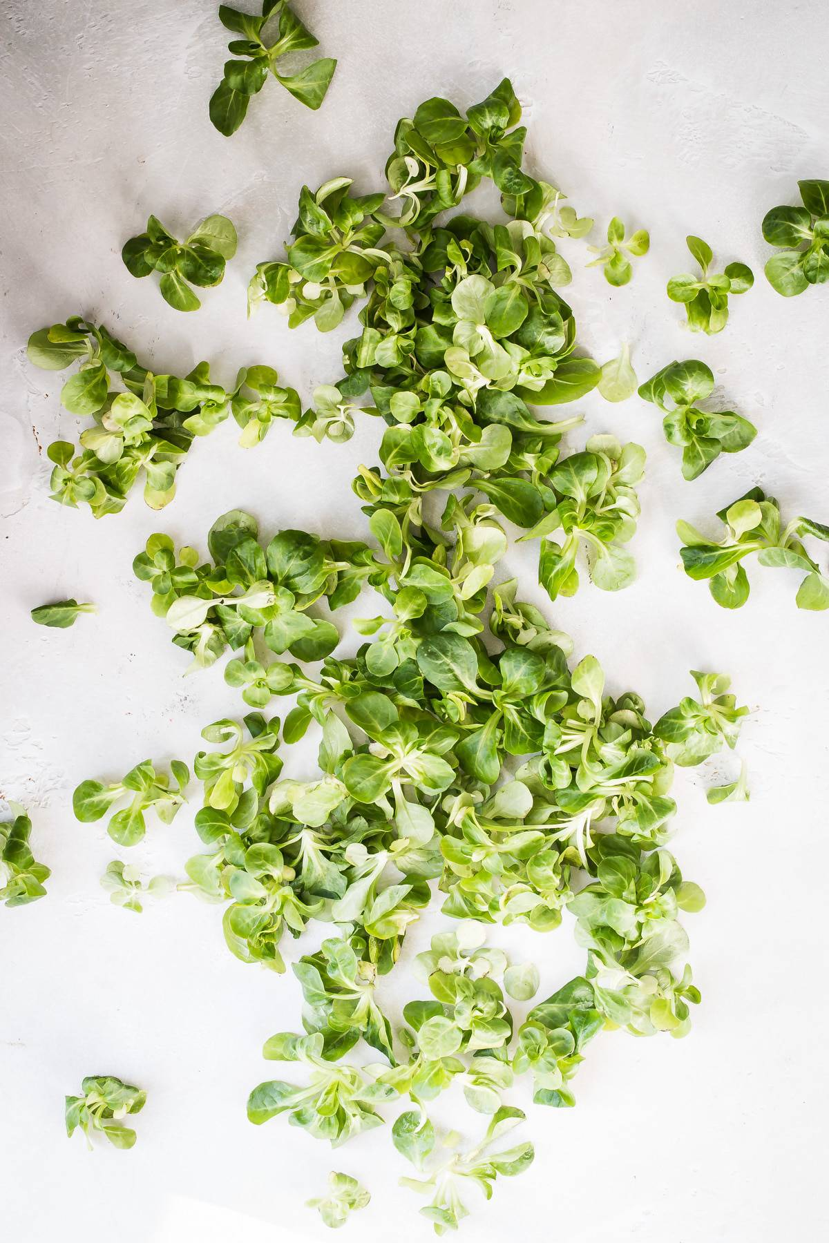 Mache salad greens